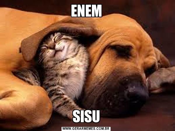 Imagem de cachorro e garo juntos como se fossem o Enem e o Sisu