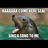 HAAAAAA COME HERE SEAL  SING A SONG TO ME
