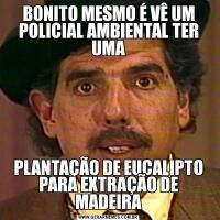 BONITO MESMO É VÊ UM POLICIAL AMBIENTAL TER UMAPLANTAÇÃO DE EUCALIPTO PARA EXTRAÇÃO DE MADEIRA