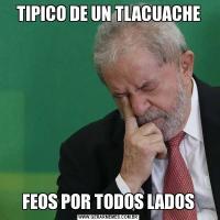 TIPICO DE UN TLACUACHEFEOS POR TODOS LADOS