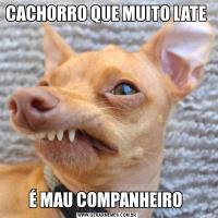 CACHORRO QUE MUITO LATE É MAU COMPANHEIRO