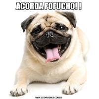 ACORDA FOFUCHO! !