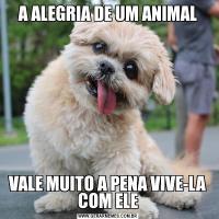 A ALEGRIA DE UM ANIMALVALE MUITO A PENA VIVE-LA COM ELE