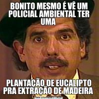 BONITO MESMO É VÊ UM POLICIAL AMBIENTAL TER UMA PLANTAÇÃO DE EUCALIPTO PRA EXTRAÇÃO DE MADEIRA