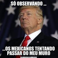 SÓ OBSERVANDO ......OS MEXICANOS TENTANDO PASSAR DO MEU MURO