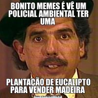 BONITO MEMES É VÊ UM POLICIAL AMBIENTAL TER UMA PLANTAÇÃO DE EUCALIPTO PARA VENDER MADEIRA