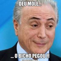 DEU MOLE...... O BICHO PEGOU !!