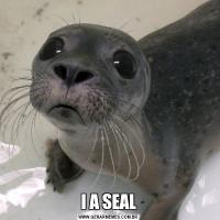 I A SEAL