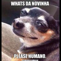 WHATS DA NOVINHAPLEASE HUMANO.