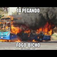 TA PEGANDOFOGO  BICHO