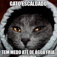 GATO ESCALDADOTEM MEDO ATÉ DE ÁGUA FRIA